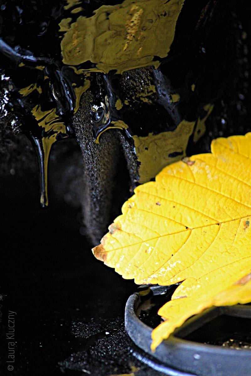 Gelbes Blatt und schwarzes Pech