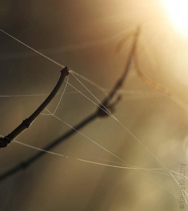 Spinnennetz in der winterlichen Sonne