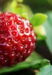 Makroaufnahme: Erdbeere