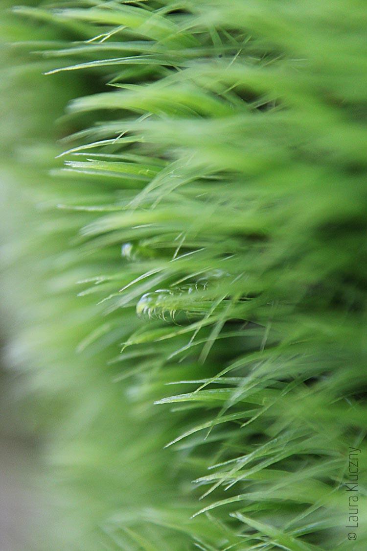 Grüne Mooswand