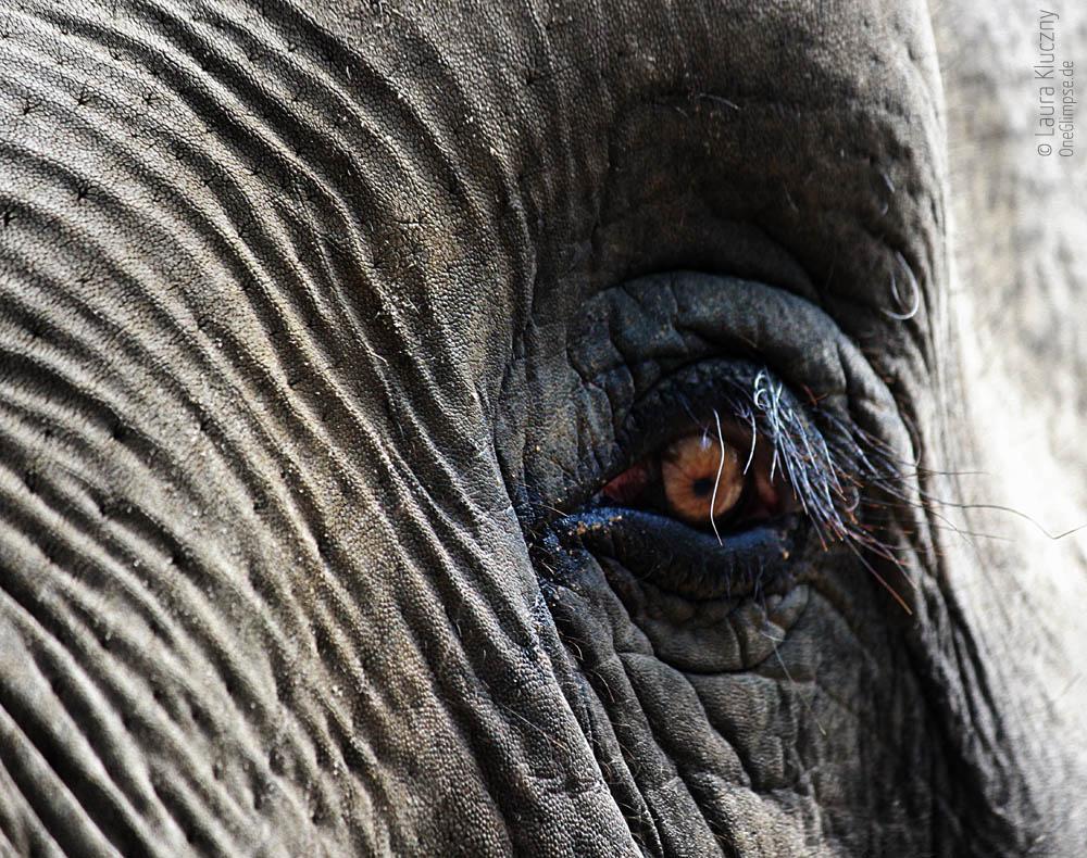 Elefant, Tierpark Hagenbeck