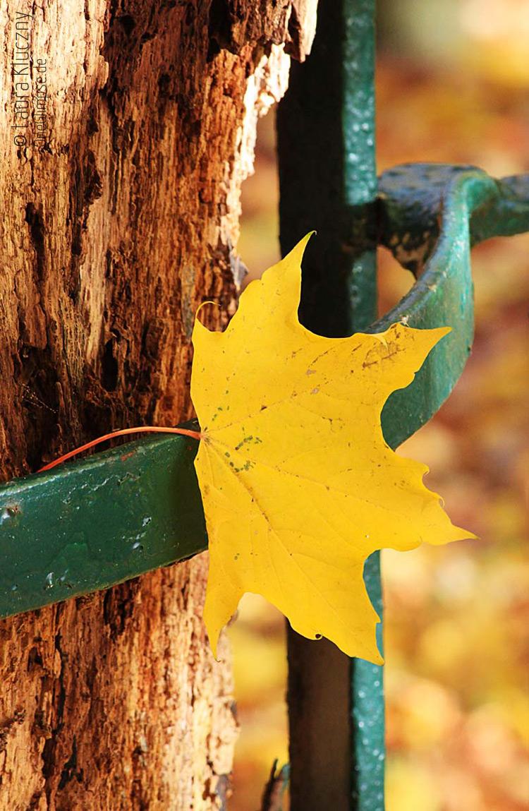 Hübsche Herbstanmutung