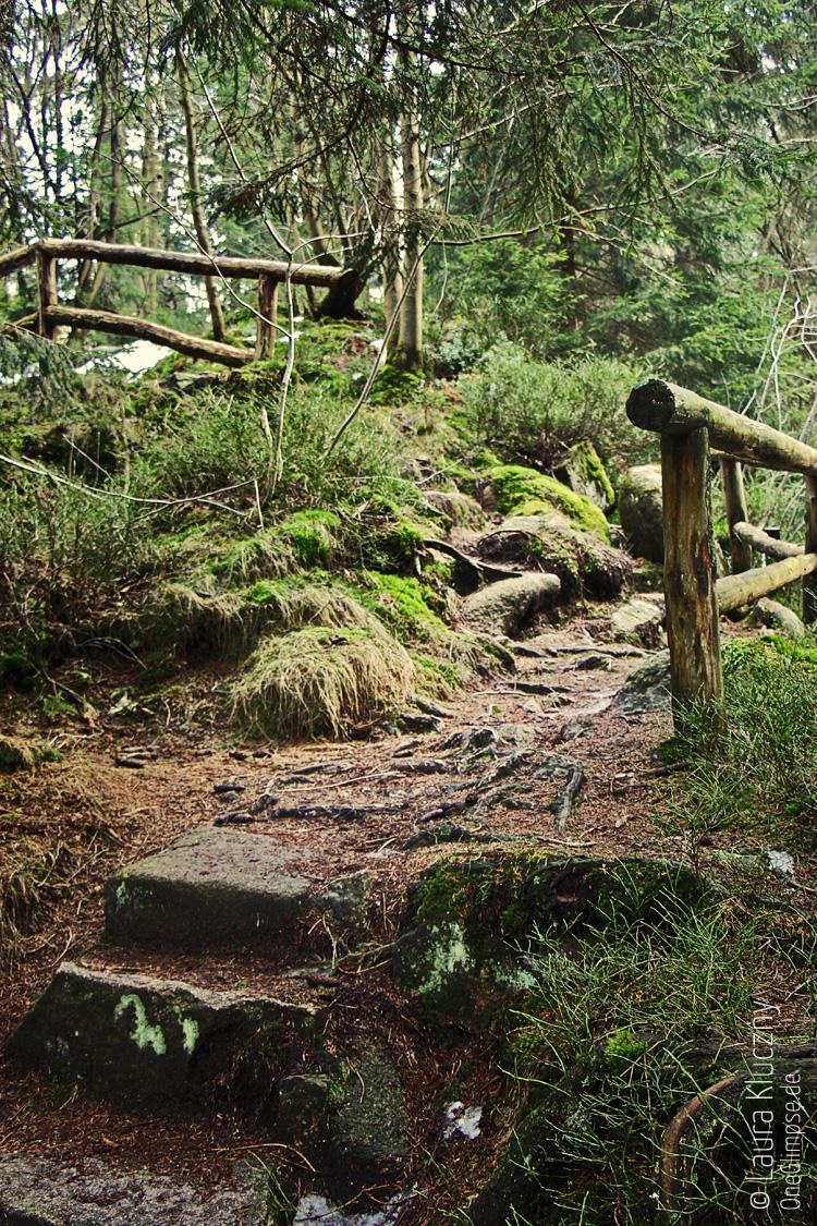 Märchenwald-Feeling im Harz