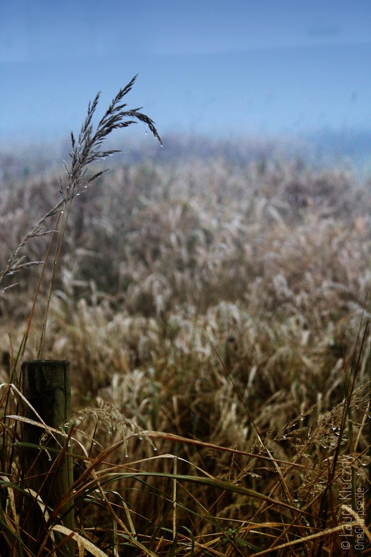 In der Dämmerung: Nebel umschließt eine Wiese