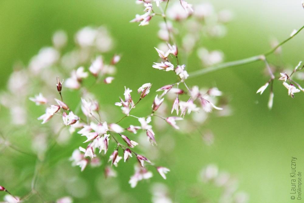 Gras mit rosa Blüten, knallgrün, Makroaufnahme