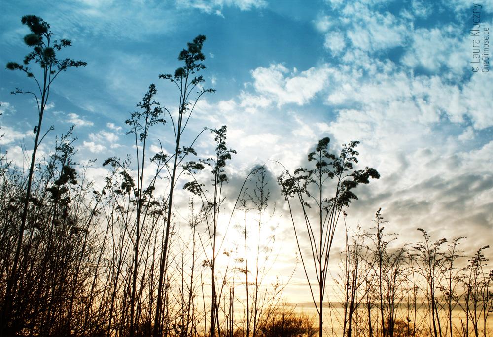 Gräser-Silhouetten im Himmel, Sonnenuntergang