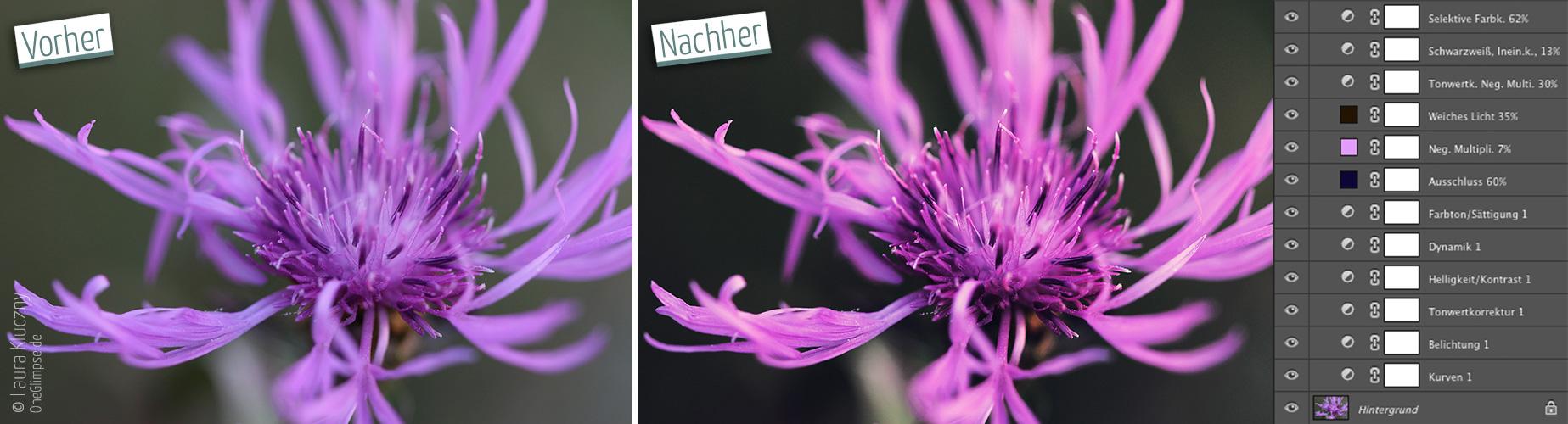 Vorher-Nachher: Die Blüte wurde mehr in Szene gesetzt