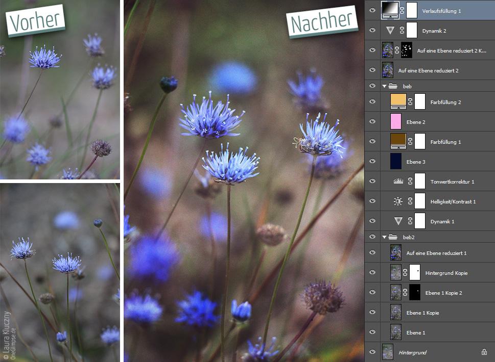 Vorher-Nachher: Eine Komposition aus zwei Bildern, Doppelbelichtung, blau-lila Acker-Witwenblume. Mit Photoshop-Ebenenpalette