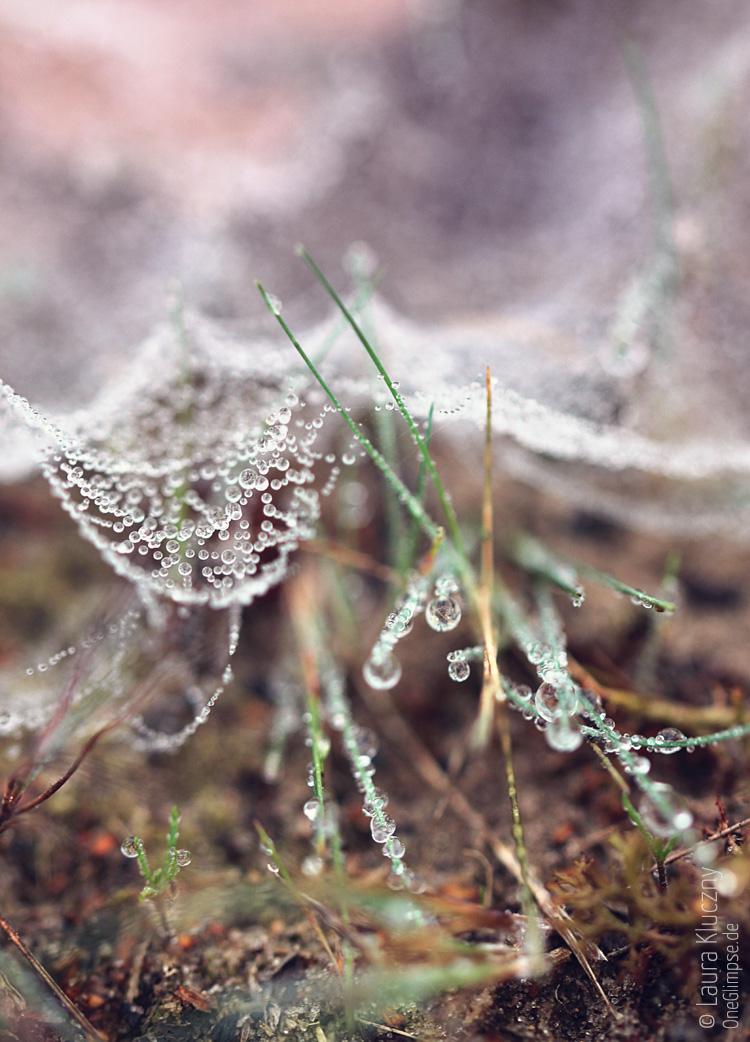 Zauberhafter Herbst: Spinnenweben verschleiert durch Tautröpfchen zwischen Gräsern, Makroaufnahme