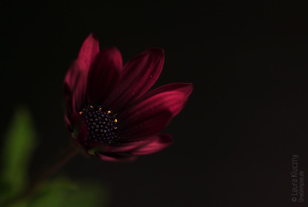 """""""Geheimnisvoller Lichtschimmer in der Dunkelheit"""" zum Thema Dunkelheit: Foto-November: Fotoprojekt von Arne Kerlin"""