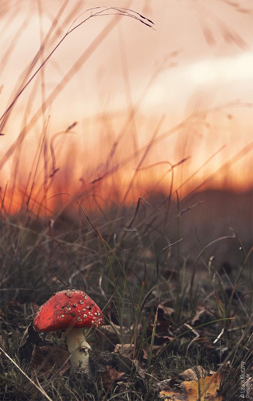 """""""Die letzt Wärme weicht der kalten Dunkelheit"""" zum Thema Herbstblues: Foto-November: Fotoprojekt von Arne Kerlin"""