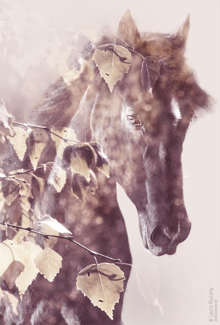 """""""Majestätisch: Pferd""""   Doppelbelichtung mit Photoshop: Pferd kombiniert mit Birkenblättern"""