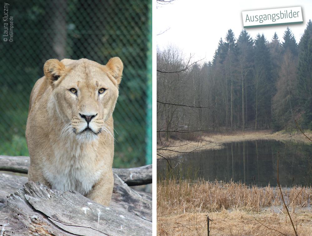 """Ausgangsbilder zur Doppelbelichtung """"Stärke und Ruhe: Löwe"""""""