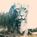 Doppelbelichtung mit Photoshop: Löwin kombiniert mit Tannen und Gräsern