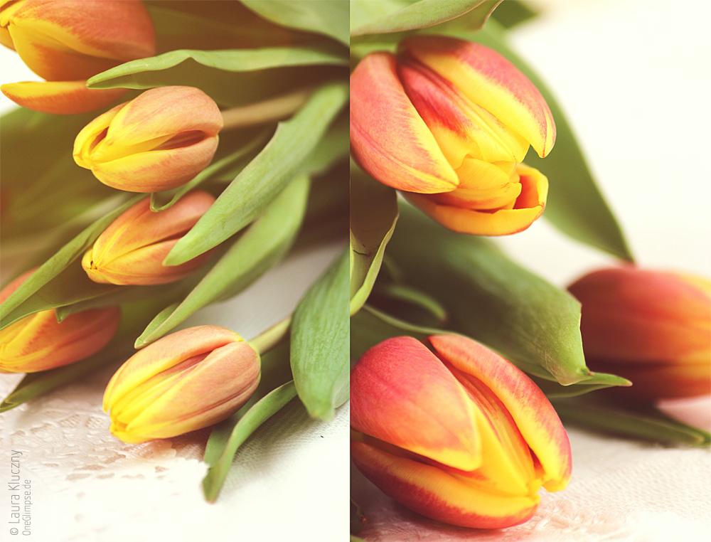 Der Frühling kommt: wunderhübsche Tulpen