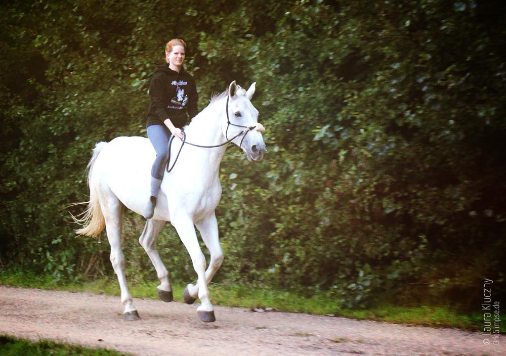 Mein Pony :D     Reitbeteiligung und Lieblingspferd: der Schimmel Wilhelm