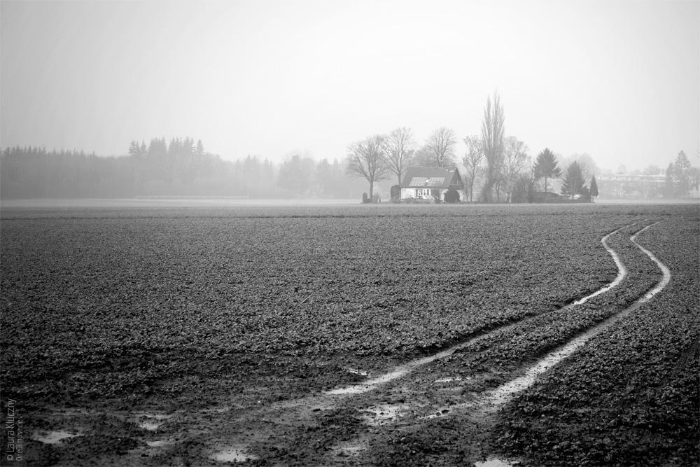 Grau und schmuddelig war es am Neujahrstag, passend dazu ist das Bild schwarzweiß gehalten