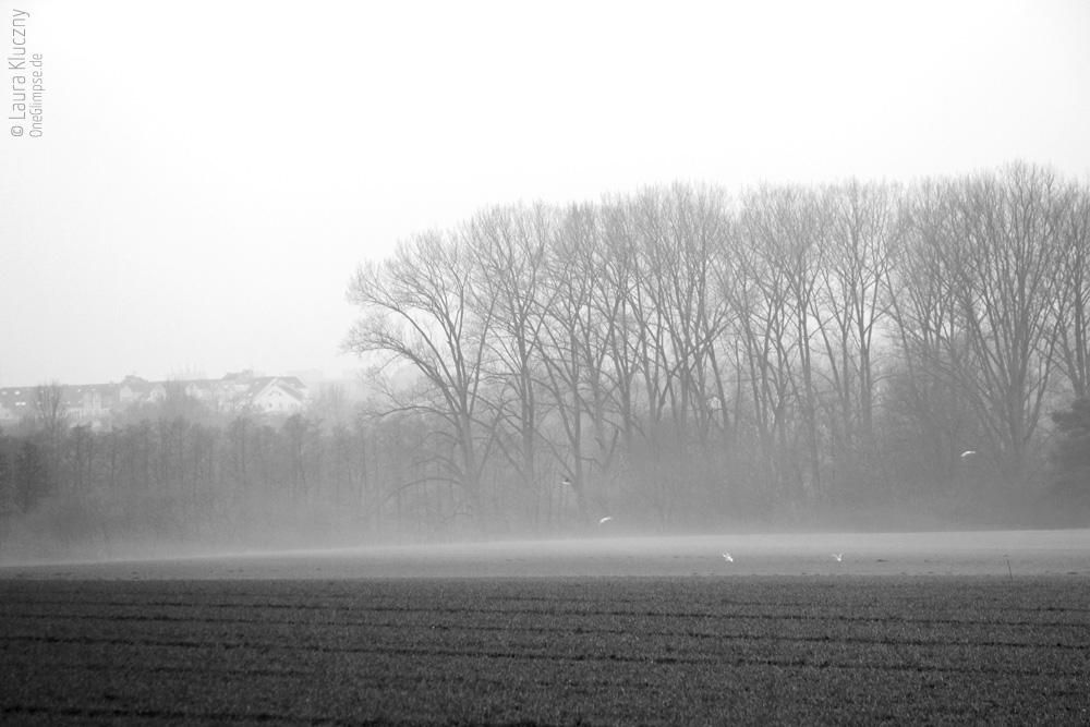 Trister Neujahrsspaziergang, aber passend zur monochromen bzw. Schwarzweiß-Fotografie: Wald- und Feldabschnitt mit Möwen