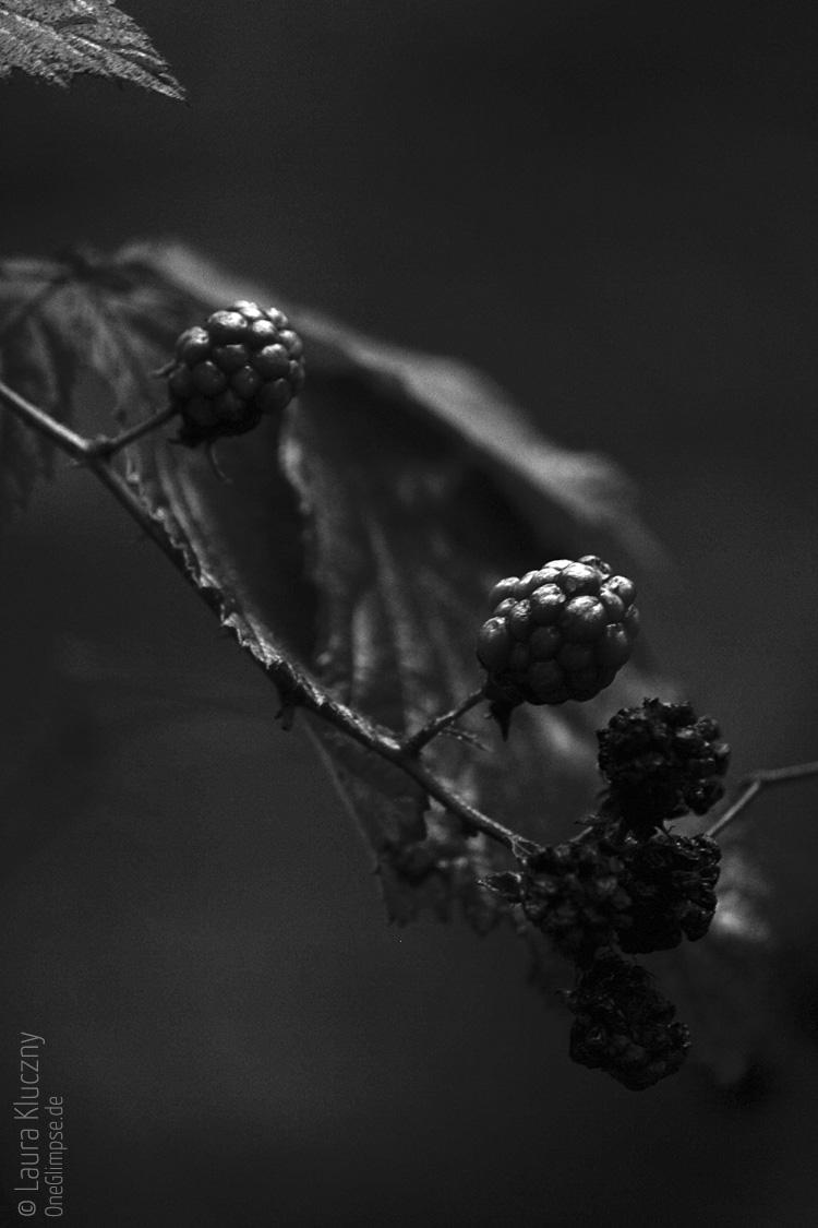 Als es schon recht dunkel wurde, habe ich noch diese Brombeeren aufgenommen. Toller schwarzweißer Kontrast!