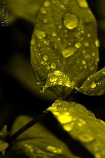 Monochromes Bild welches aus Grüntönen, nicht aus Grautönen besteht, wie bei einem herkömmlichen Schwarzweißbild
