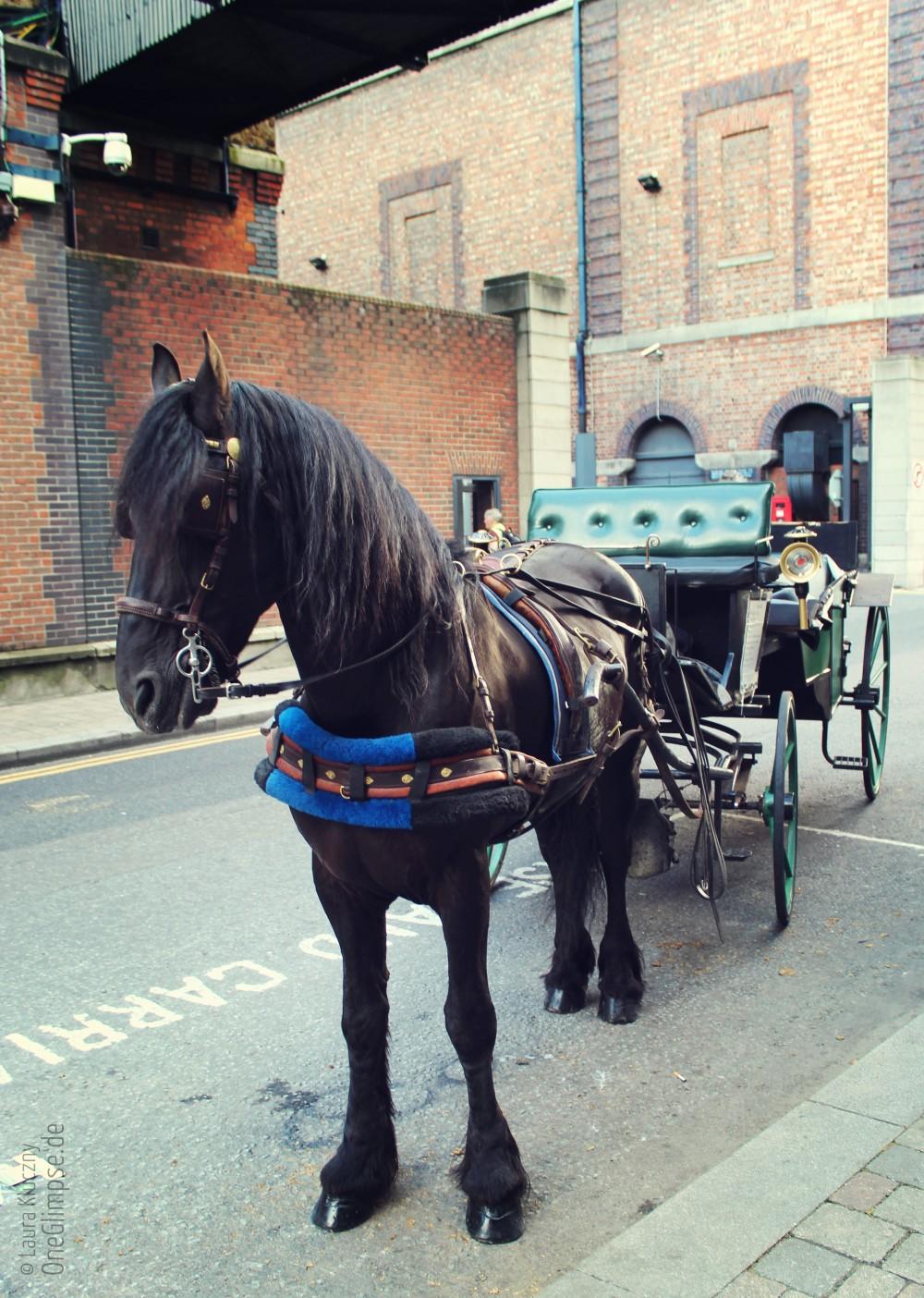 Kutschpferd vor dem Guinness Storehouse, Dublin