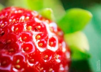 Erdbeere Makroaufnahme