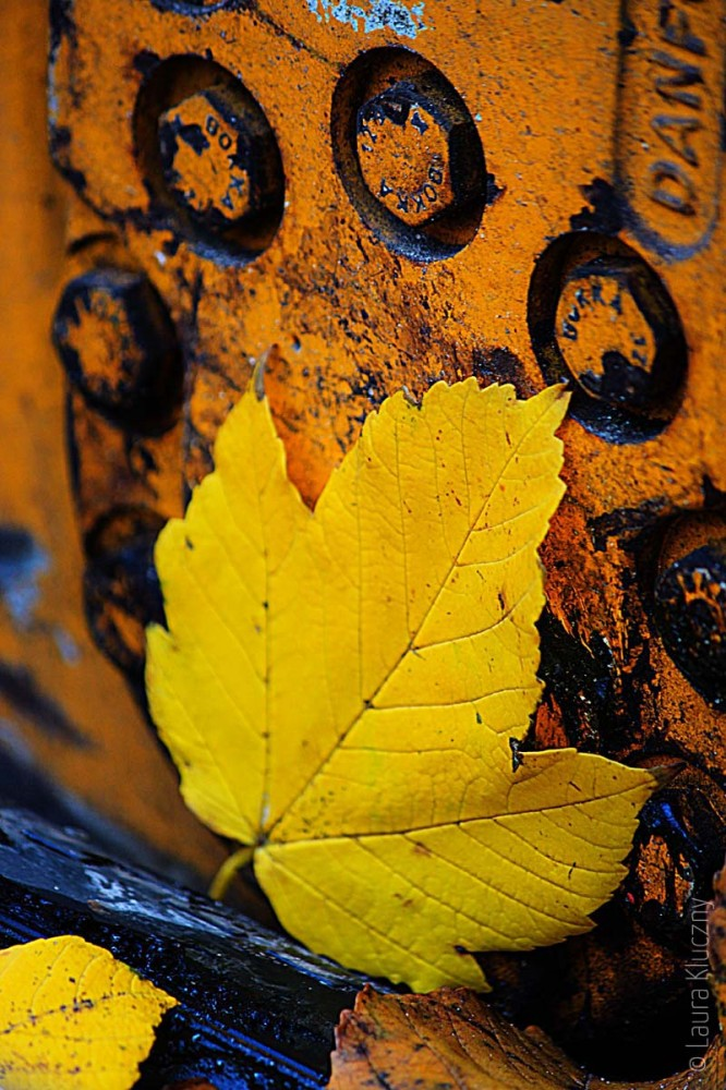 Herbst am Laster