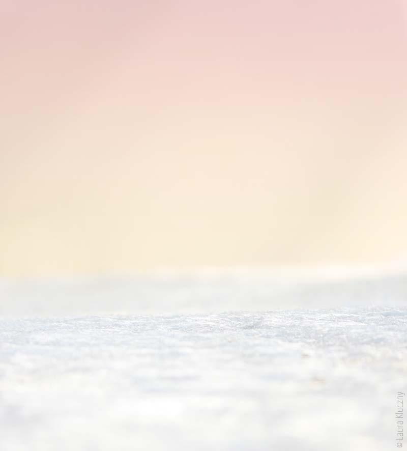 Schnee an Rosa