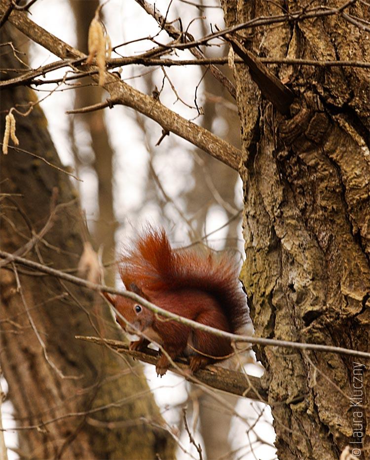 eichhörnchen1