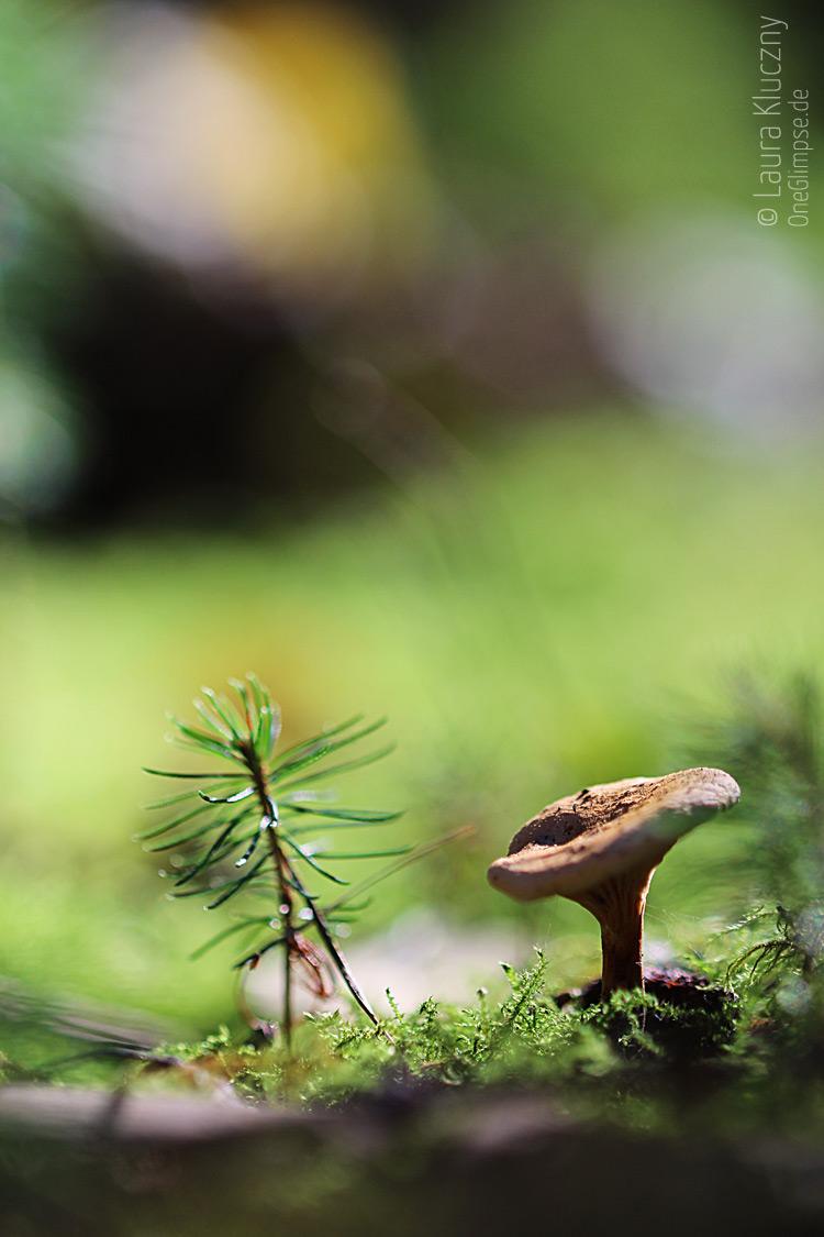 Miniaturfoto: Kleiner Pilz mit seinem kleinen Freund, der Tanne