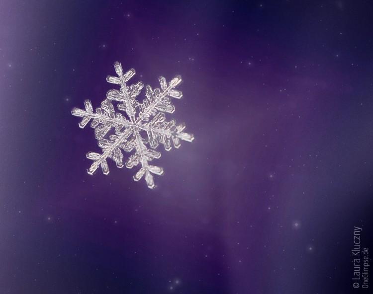Makroaufnahme einer Schneeflocke – lila