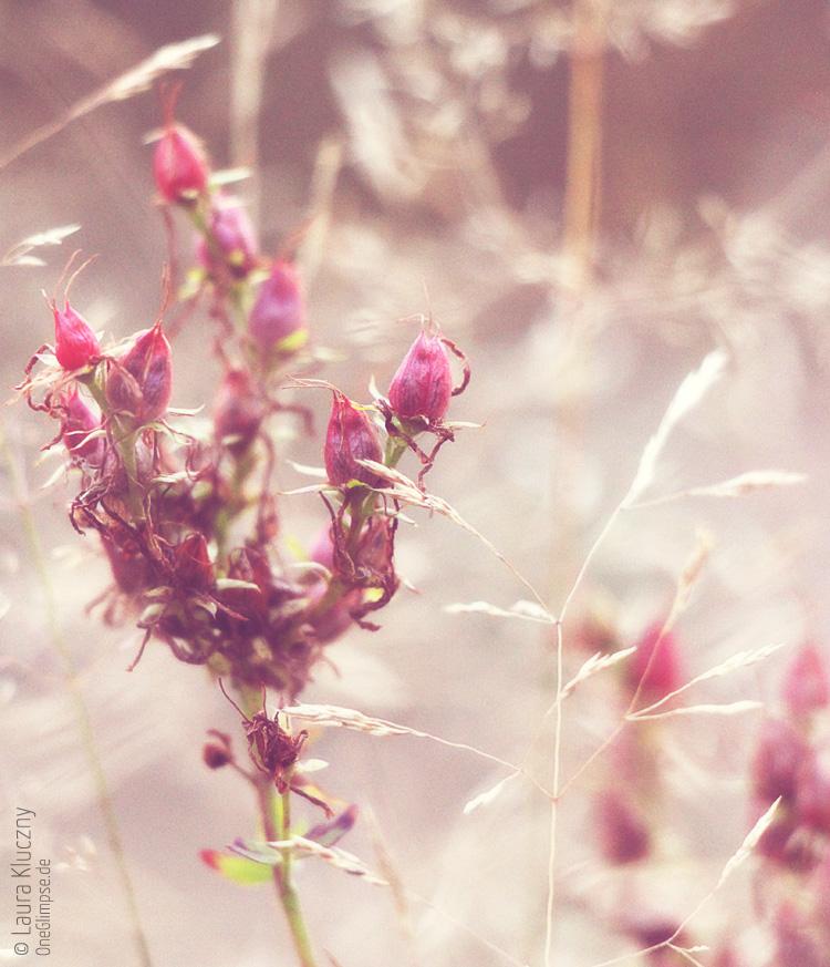 Buttercream-Effekt: Gräser und rote Blüten